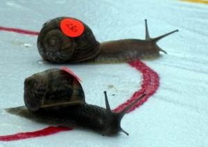 カタツムリ競走世界大会