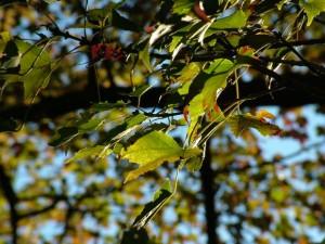 autumnとfallの違いについて