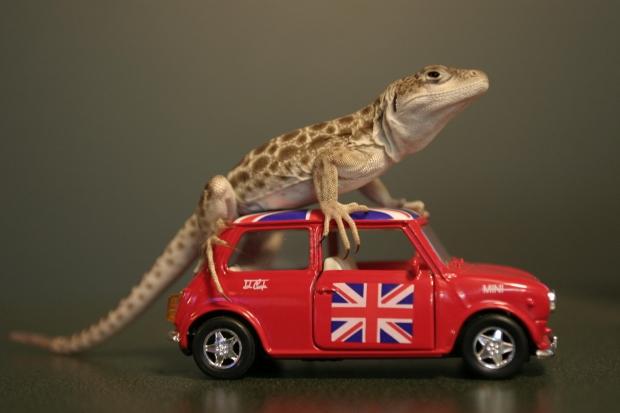 イギリス英語のスラングとイギリス英語特有単語:「peckish」、「moreish」、「fry-up」、「bangers」、「grub」(食べ物関係スラング)