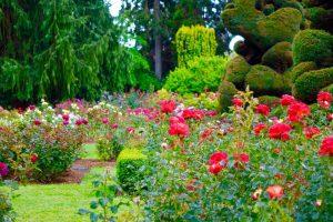 「庭」はイギリス英語で何と言うのでしょうか?