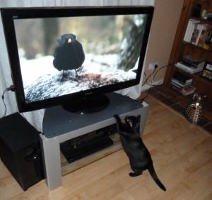 テレビはイギリス英語で何と言うでしょうか?