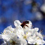 「花粉症」は英語で何という?「鼻がむずむず」,「鼻がちくちくする」等の花粉症に関するボキャブラリーも紹介!