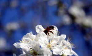 「花粉症」は英語で何という?