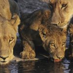 「動物の群れ」は英語で何と言の? 「群れ」という意味になる英語の言い方を沢山紹介します!