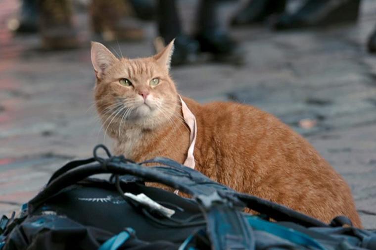 「ボブという名の猫」のあらすじについて
